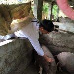 Học sinh Trung cấp Chăn nuôi thú y Trường Cao đẳng nghề DTNT Bắc Kạn thực hiện hỗ trợ công tác tiêm phòng định kỳ cho đàn vật nuôi trên địa bàn huyện Pác Nặm đạt hiệu quả